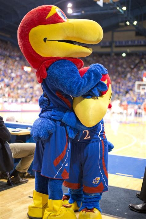 5 Things You Shouldn't do in the KU Student Section