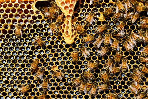 This is what trypophobia is, how it feels and why you can